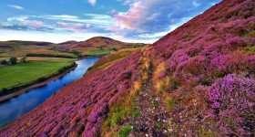 Schotland heidelandschap