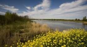Nederland Biesbosch gele bloemen